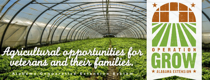 Operation Grow: Agricultural opportunities for veterans and their families