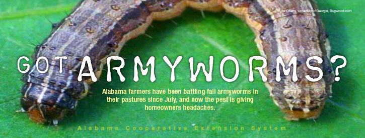 Got Armyworms? Alabama farmers have been battling fall armyworms in their pastures since July, and now the pest is giving homeowners headaches.