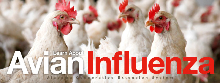 Learn About Avian Influenza