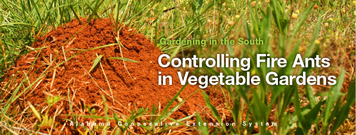 Controlling Fire Ants in Vegetable Gardens