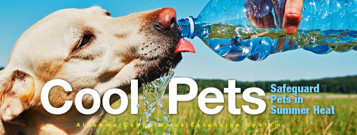 Cool Pets: Safeguard Pets in Summer Heat