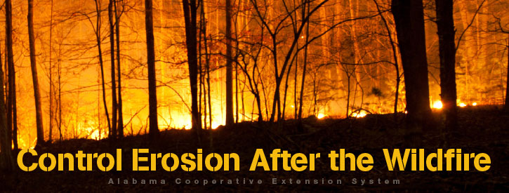 Control Erosion After the Wildfire