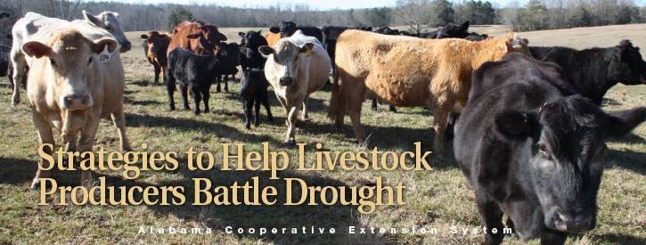 Strategies to Help Livestock Producers Battle Drought