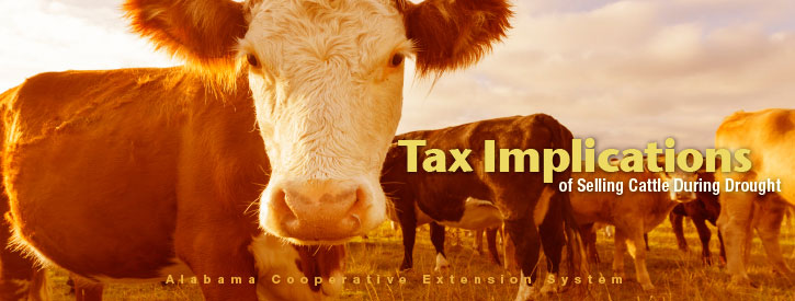 Tax Implications of Selling Cattle During Drought
