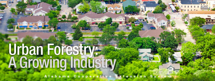 Urban Forestry: A Growing Industry