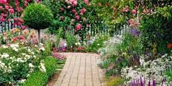 a home garden with flowers