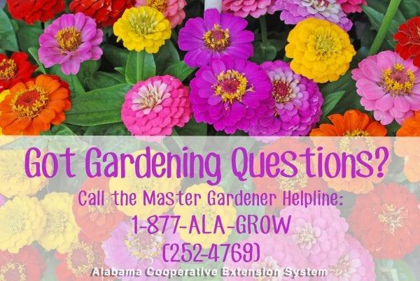 master gardener helpline