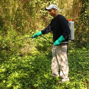 man using a sprayer to control invasive plants