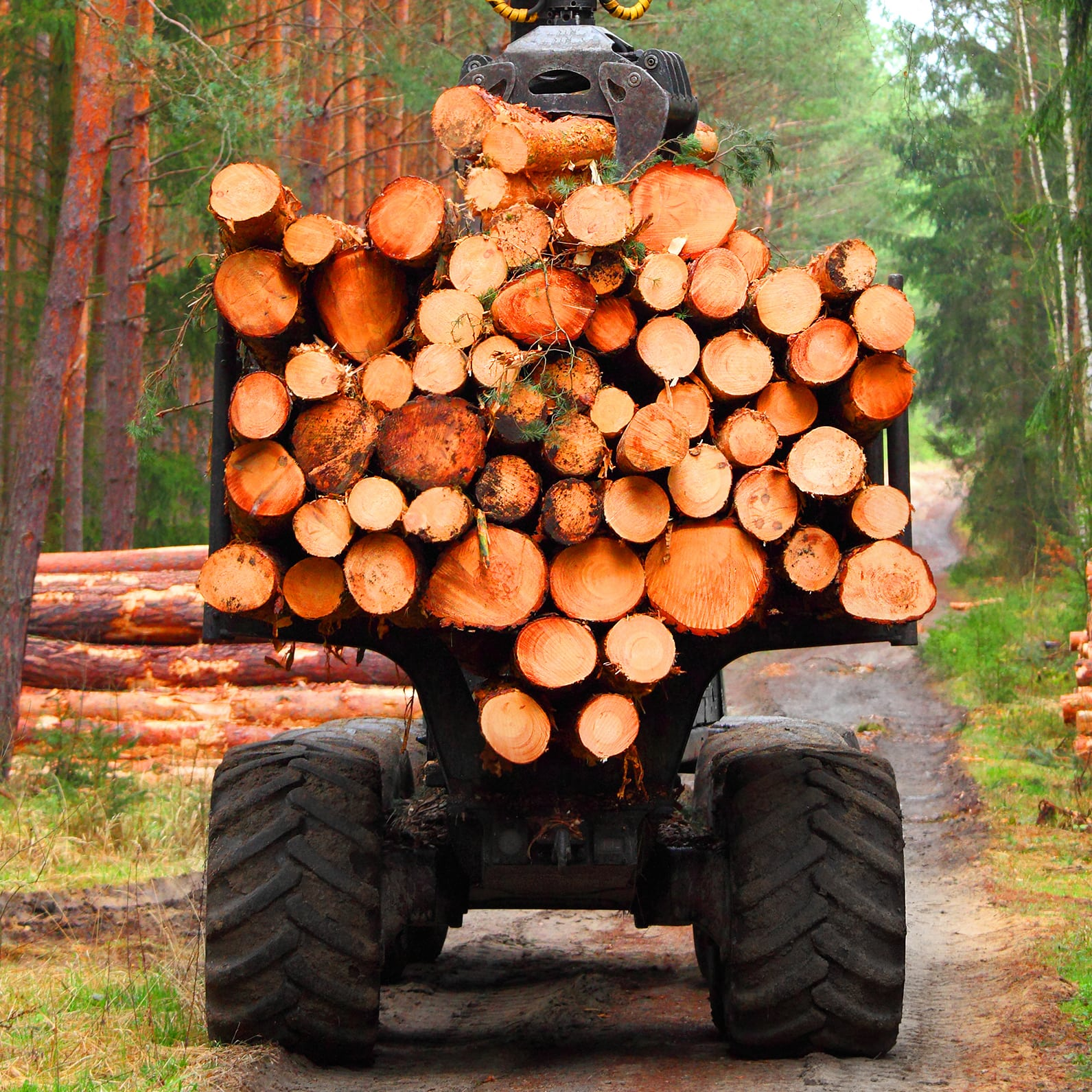 Lumberjack with modern harvester working in a forest
