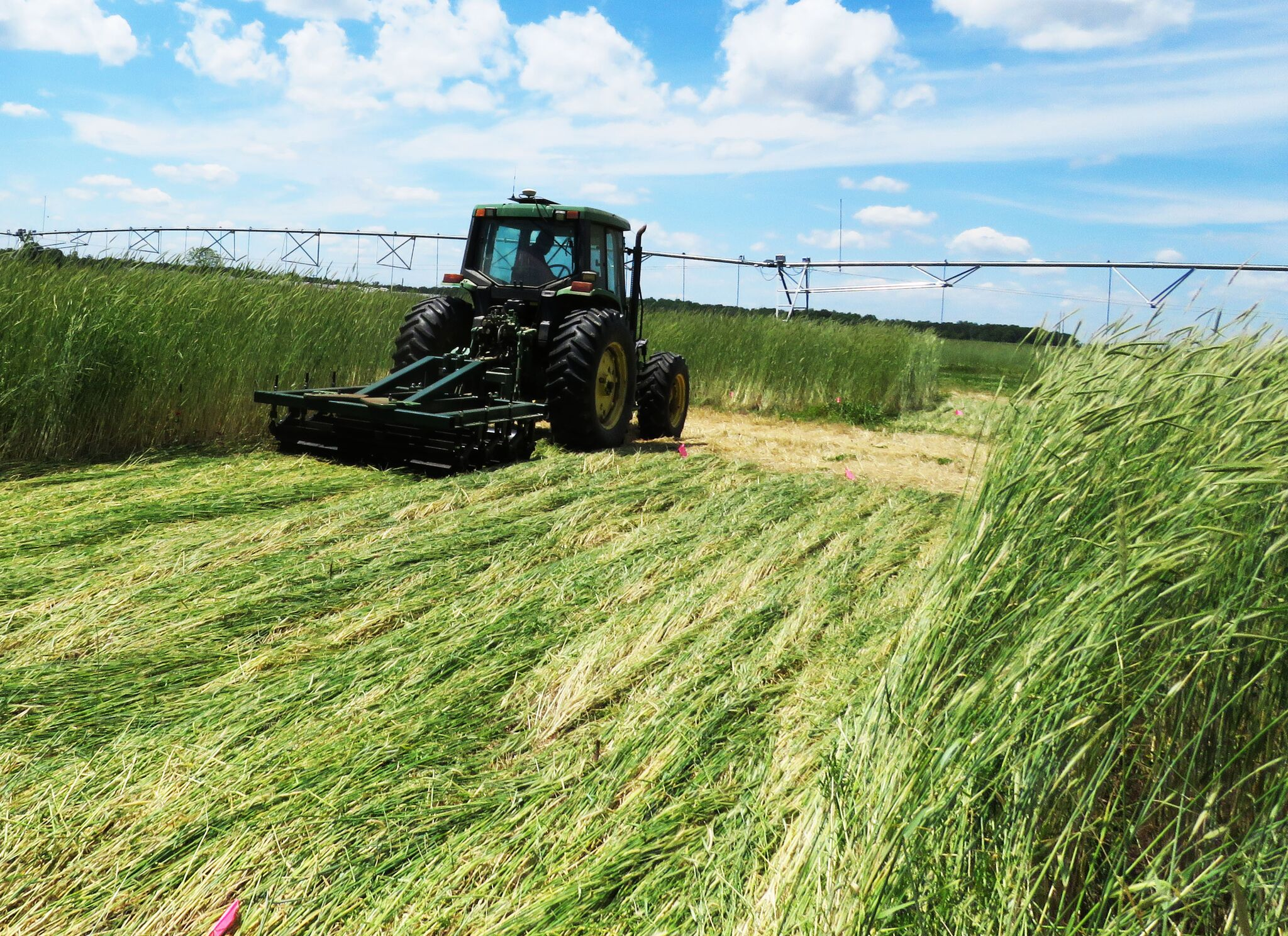 A tractor pulls a roller/crimper through a field. This conservation system practice terminates the cover crop by crimping it down. Farmers will plant into the heavy residue.