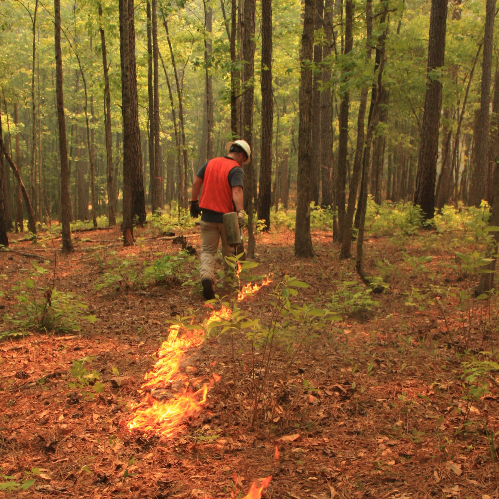 prescribed burn in forest