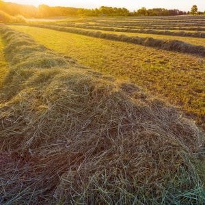 Sun setting on a field of freshly cut hay in the countryside