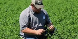 Landon Marks, an Extension regional agent, inspecting an alfalfa mixture hay field.