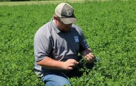 Landon Marks, an Extension regional agent, inspecting an alfalfa mixture hay field.