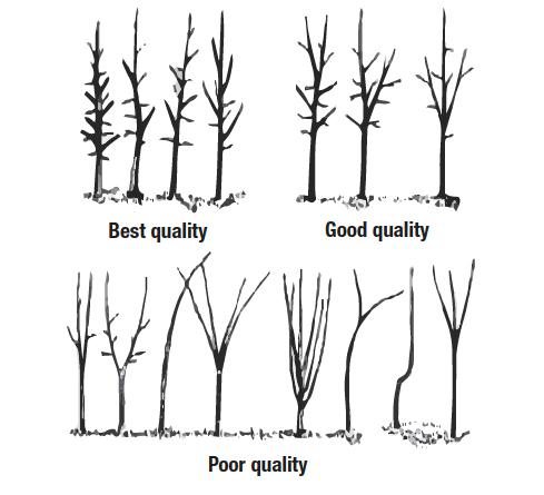 Illustration of tree quality
