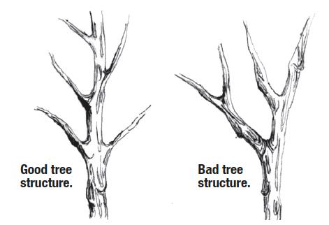 Tree Structure Comparison