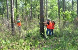 Cruising Timber and taking tree measurments