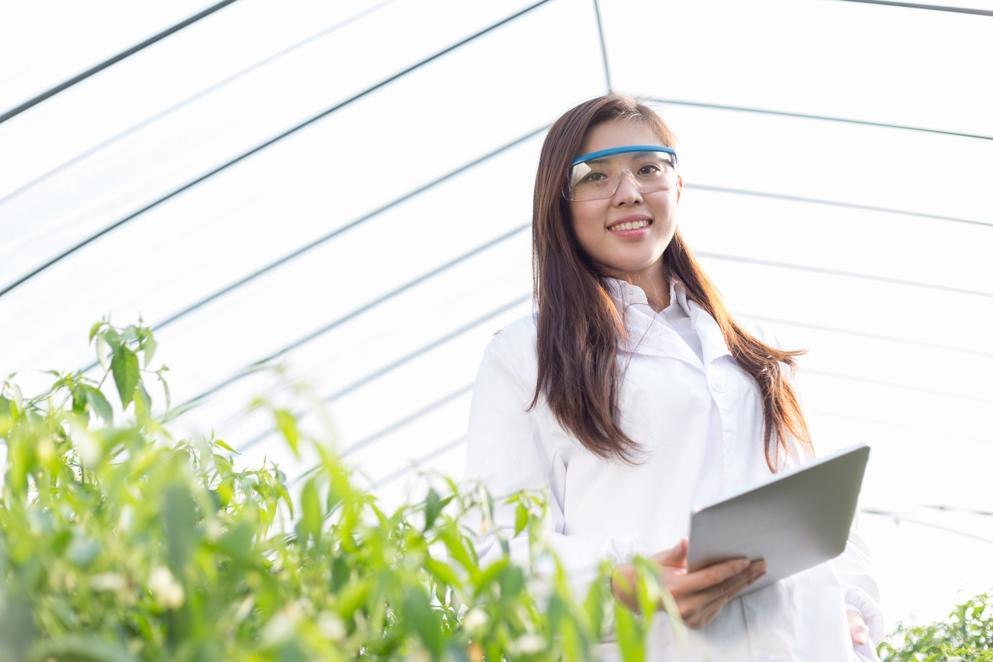 Agriculture scientist standing in a greenhouse with young bioengineered plants. Stock image by zhudifeng.