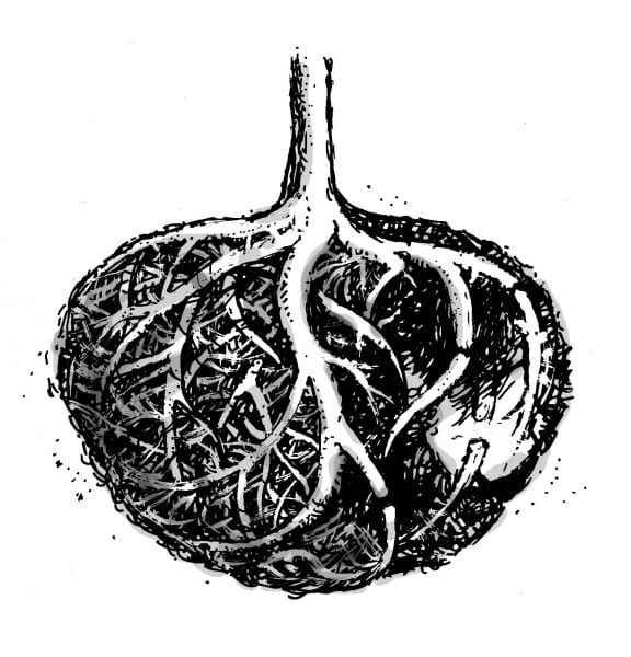 Drawing of cracked root ball.
