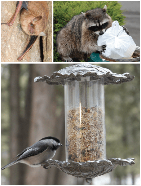 Top Left: Bats provide a valuable service by consuming pest insects. Top Right: Keep tight-fitting lids on trash cans to discourage wildlife from raiding and scattering your garbage. Bottom: Except for using bird feeders, you should not approach or feed wildlife.