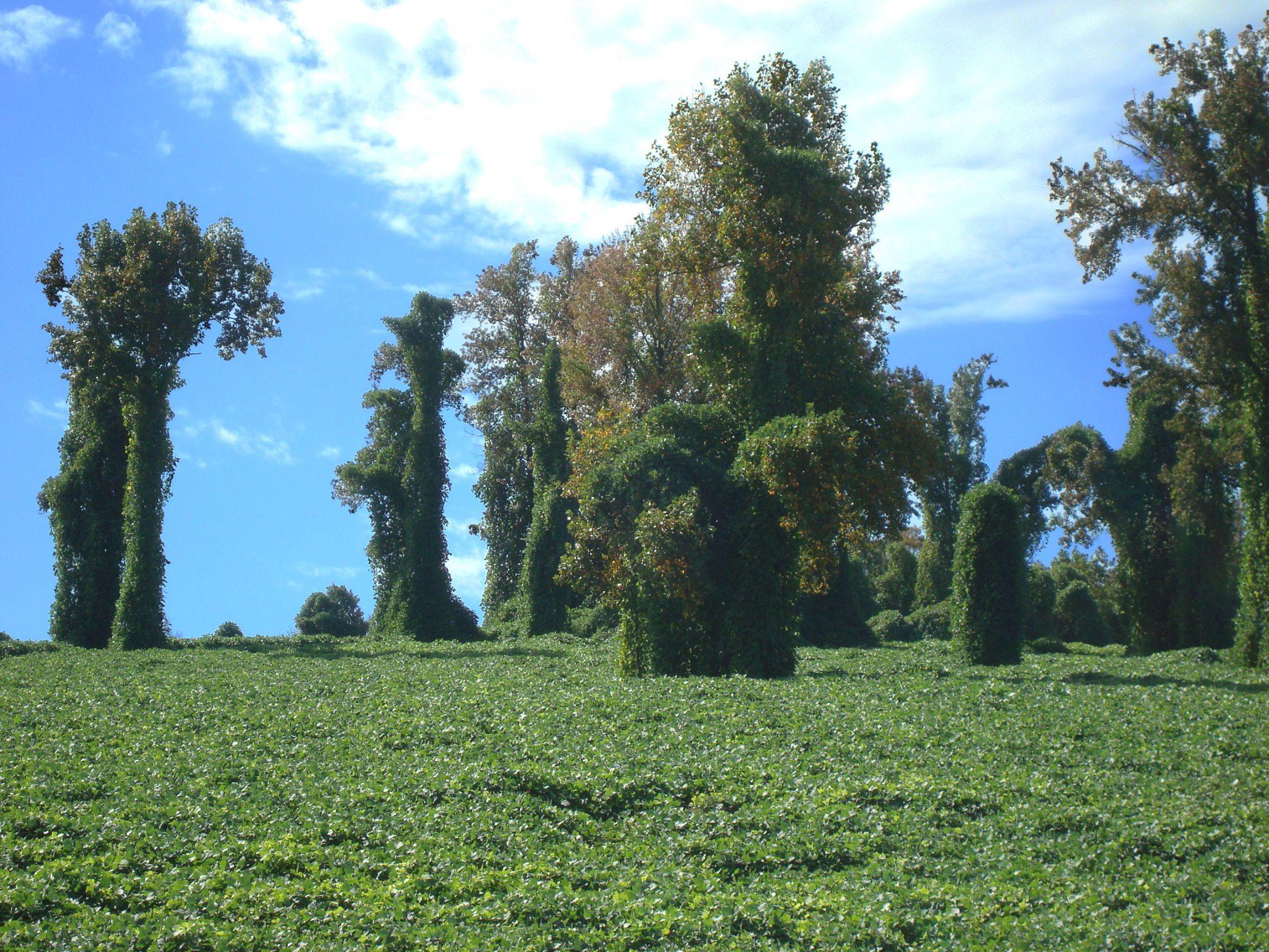 kudzu, landscape, blue skys