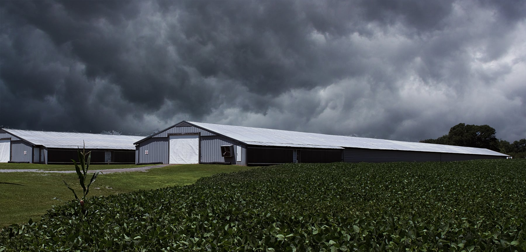 Chicken houses during a storm.