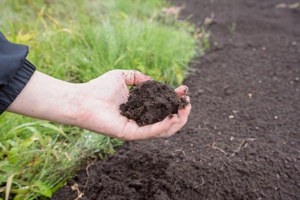 Woman grabbing soil.