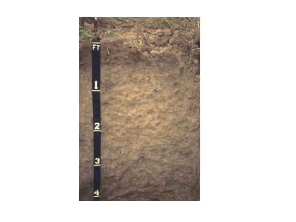 Figure 2. This Houlka silty clay is a deep, somewhat poorly drained, very slowly permeable, acidic soil found in the flood plains of the Black Belt region.