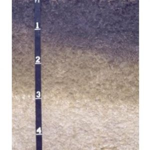 Figure 1. This Houston clay is typical of the clayey, alkaline Black Belt soils. Note the Selma chalk parent material below 3 feet.