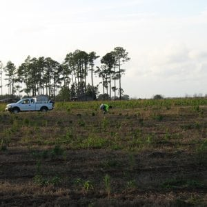 Contractors will provide labor, materials, equipment, and transportation needed to complete a planting job.