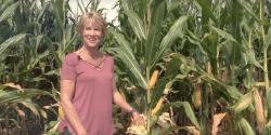 Annie Dee in a corn field. Soil Health Stewards