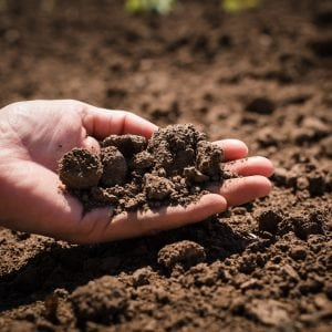 Soil, cultivated dirt, earth, ground, brown land background. Handful of soil. shutterstock.com/funnyangel.