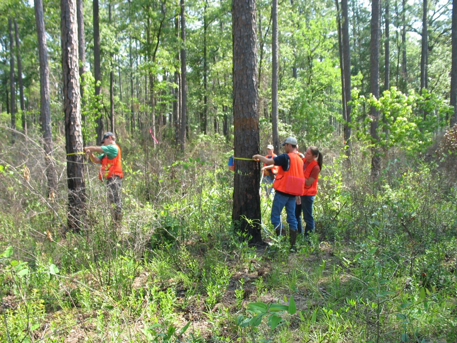 Timber cruising (Photo credit: Becky Barlow)
