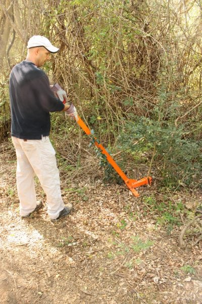 weed wrench to lift privet saplings