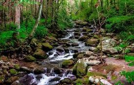 Forest stream running down rocky path