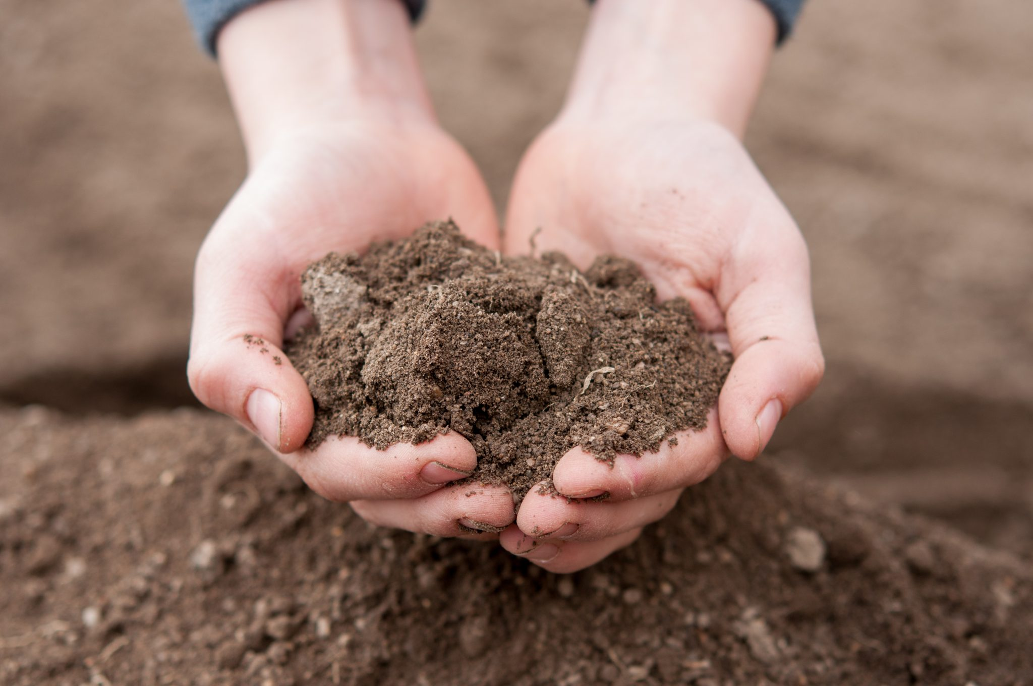 Soil in child's hands - dirty and dry
