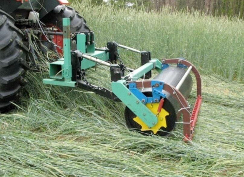 Producers can use rollers with oscillating sides to terminate cover crops.