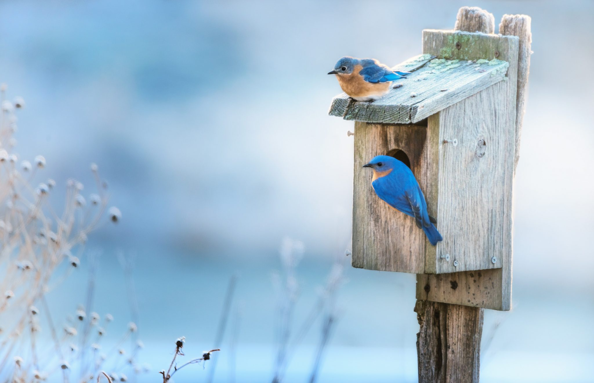 Blue birds sitting on house