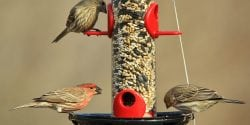 Birds eating at a feeder