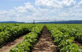 cotton field under irrigation. shutterstock/Dharris324.