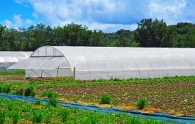 High tunnels extend the spring, fall and winter growing season in southern climates.