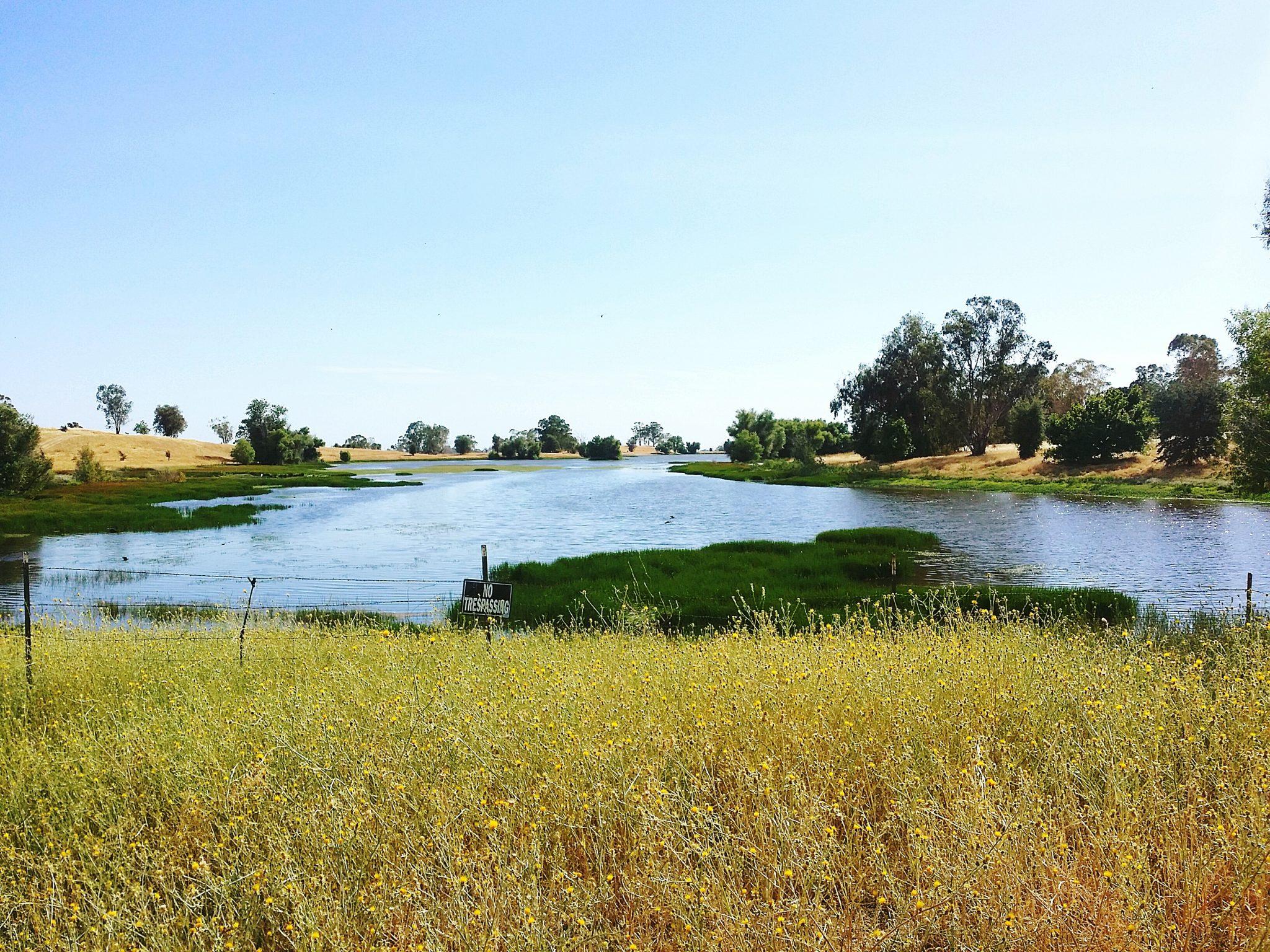 Pond Against Clear Sky