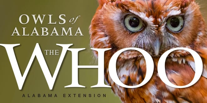 Owls of Alabama