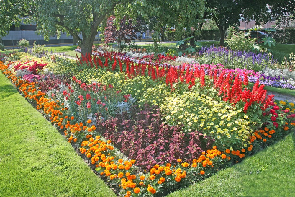 A flower bed with a variety of flowers.