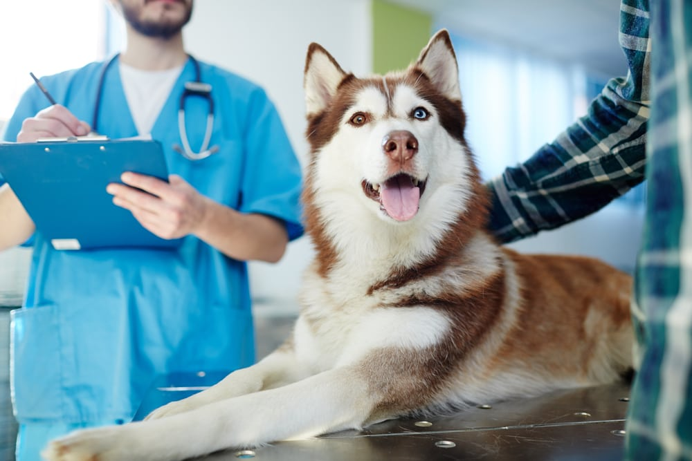 Dog getting a check up