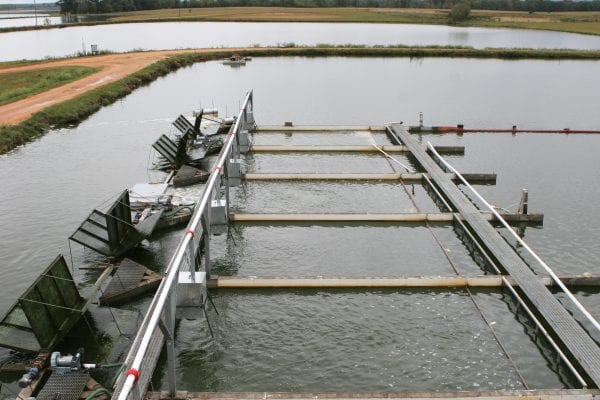 Aquaculture in pond raceway production system