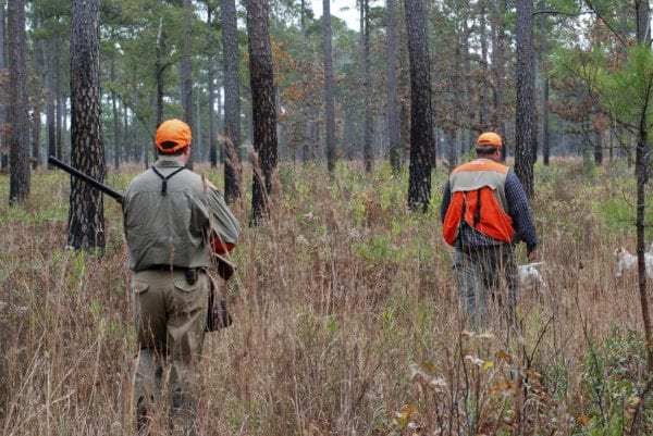 Quail hunting is a significant part of the southern hunting culture.
