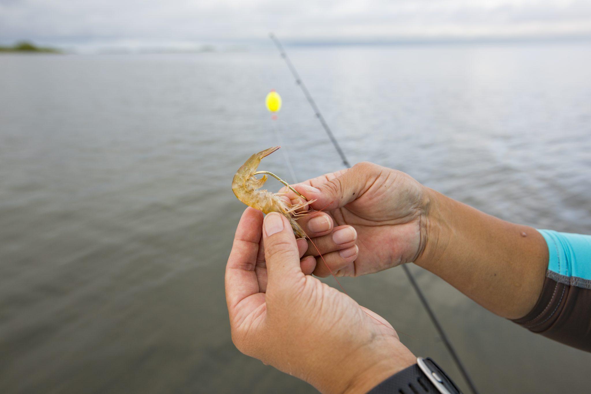 Hooking shrimp bait