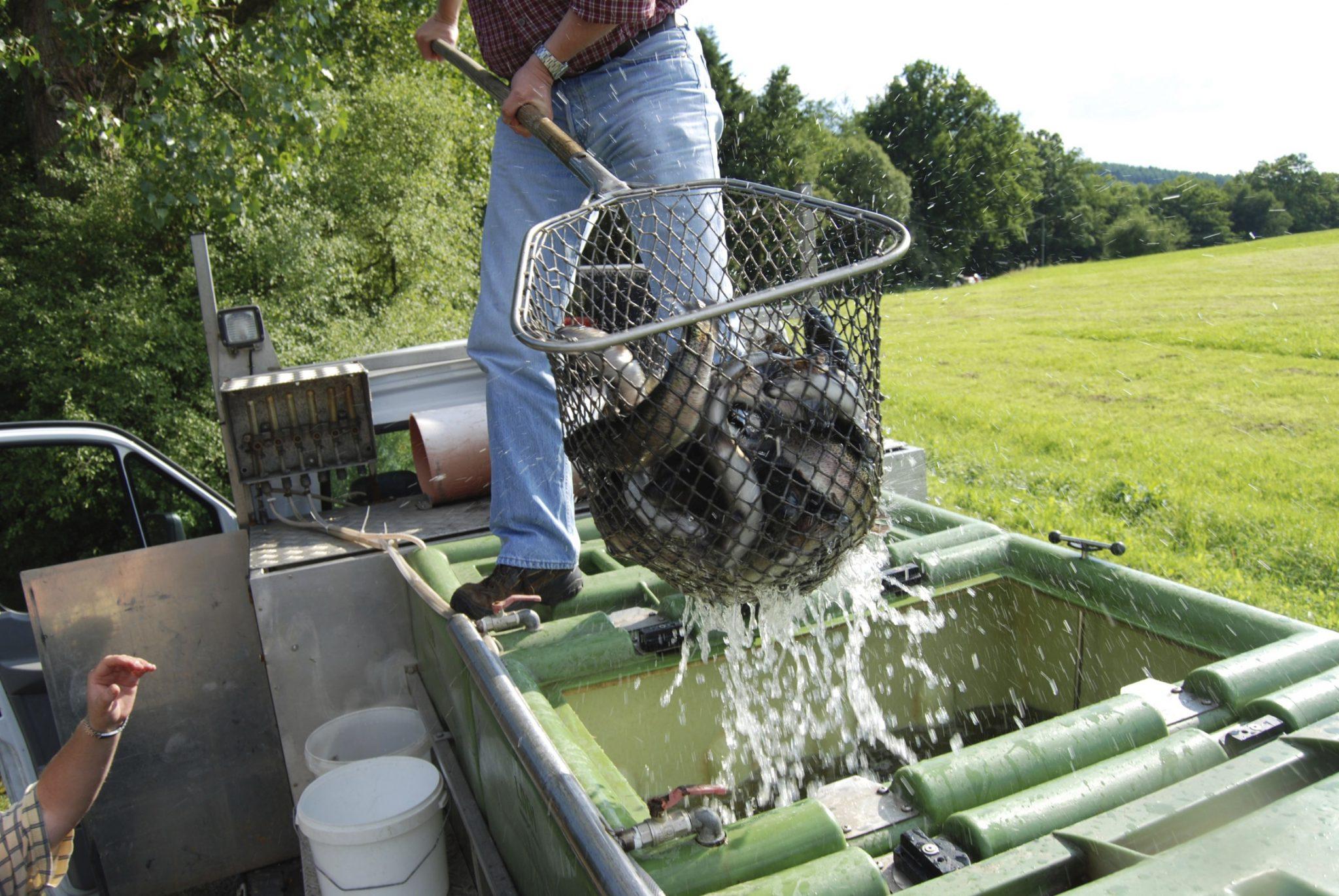 trout in a net