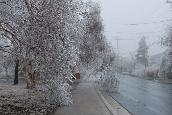 Ice storm leaves trees coated with ice.